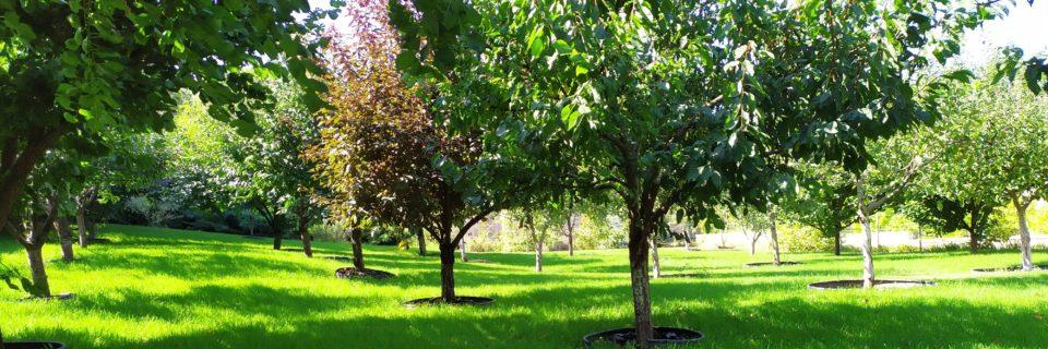 Плодовий сад на газоні
